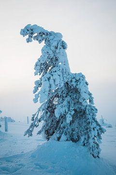 Bevroren boom in Lapland van Prints by Abigail Van Kooten