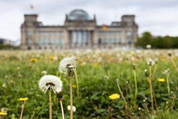 Paardenbloemen voor het Reichstag gebouw in Berlijn