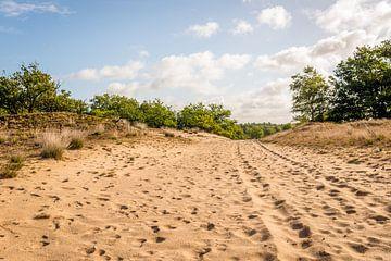 Niederländisches Naturschutzgebiet Loonse en Drunense Duinen von Ruud Morijn