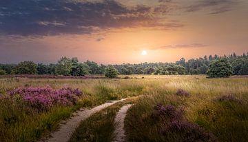 Heidelandschaft mit Sonnenuntergang