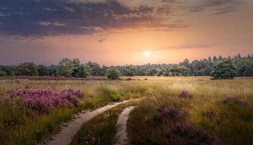Heidelandschap met zonsondergang