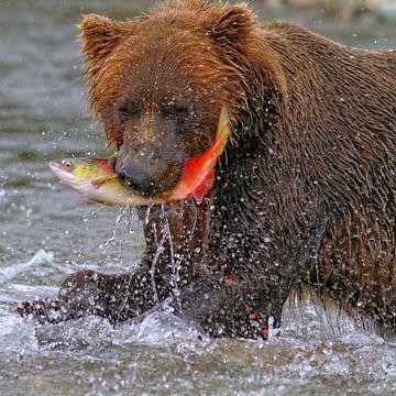 Wilde bruine beer met zalm van Ruth de Ruwe