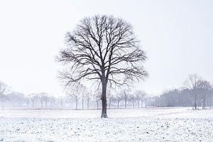 Cold Tree van