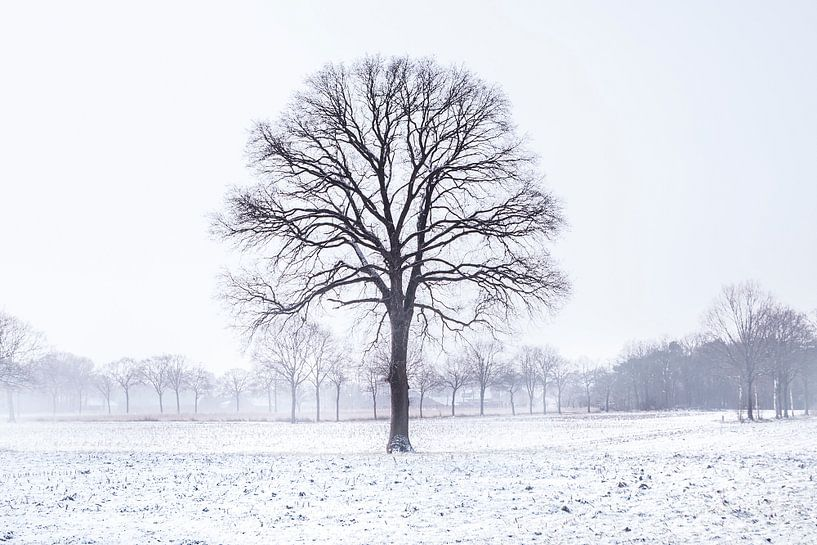 Cold Tree van Claire Droppert