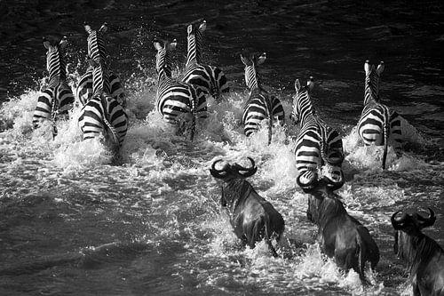 Zebra Crossing van