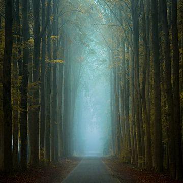 Autumn Squared von Martin Podt