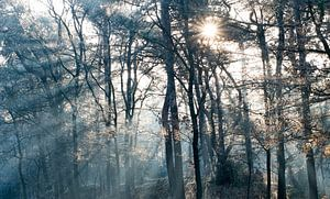 Ontwakend bos
