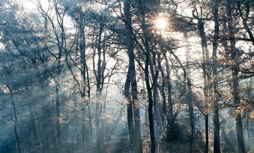 Ontwakend bos von Joshua van Nierop