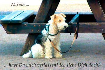 Waarom heb jij mij verlaten? Ik hou van je! van Norbert Sülzner