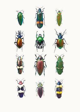 Rariteitenkabinet_Insecten_03 van Marielle Leenders