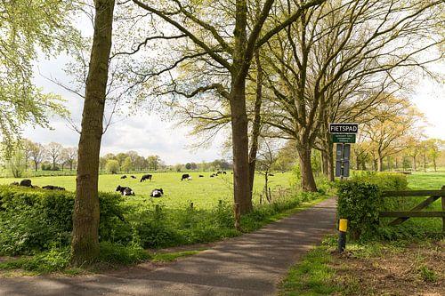 Koeien in wei bij fietspad langs Kromme Rijn