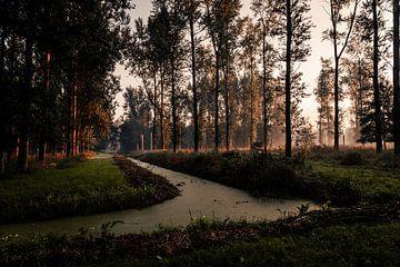 Aufgehendes Sonnenlicht im Leeuwarder Bos von Nando Foto