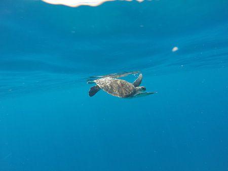 Sea turtle von Stijn Cleynhens