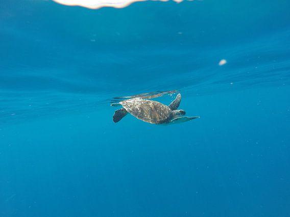 Zeeschildpad van Stijn Cleynhens