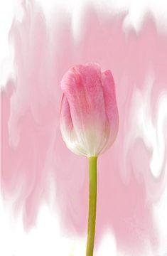 Tulpen solo von Rosi Lorz