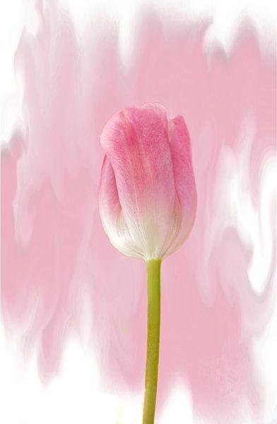 Tulpen solo van Rosi Lorz