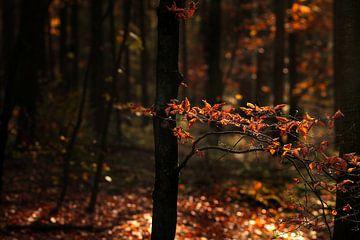 Herfst van Kees de Knegt