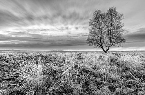 Zwart wit Ginkelse Heide van