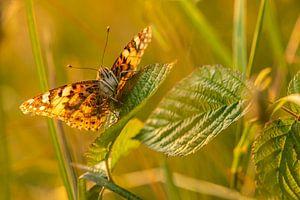 Distelvlinder van Carolina Roepers