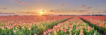 Het voorjaar met tulpen in panorama