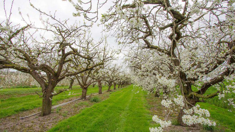 Bloesemboomgaard van Ab Donker