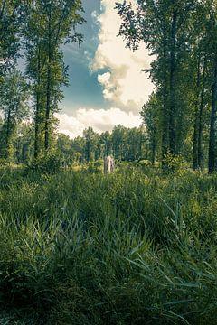 Eenzame boom in het Leeuwarder bos in Leeuwarden van Geert Jan Kroon