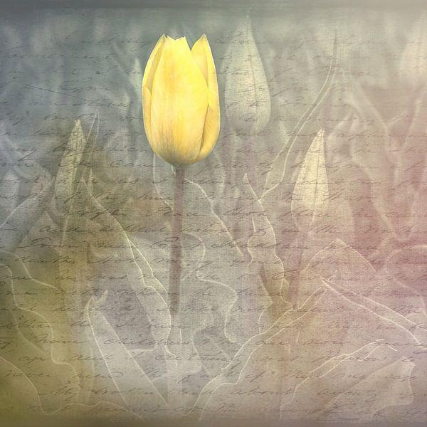 Gele tulp van eric van der eijk