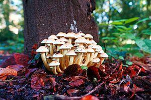Gruppe kleiner weißer Pilze im Herbstwald. von Wieland Teixeira