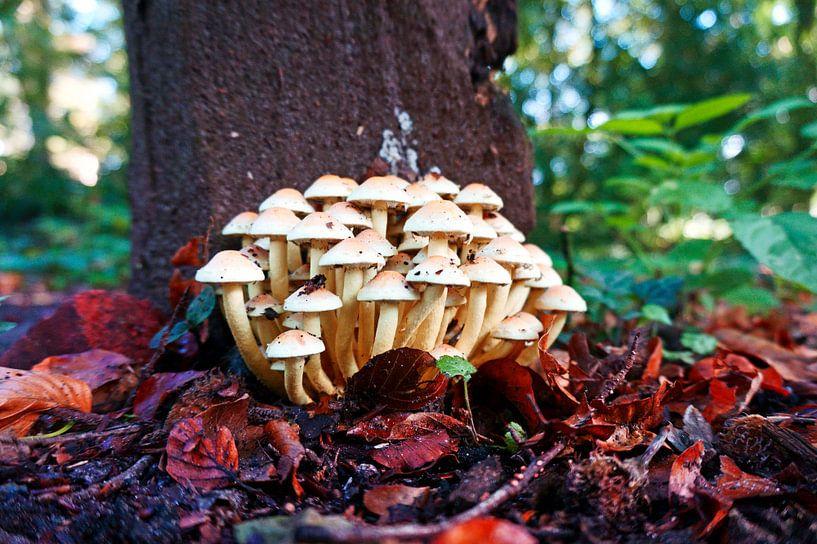 Groep kleine witte paddenstoelen in het herfstbos. van Wieland Teixeira