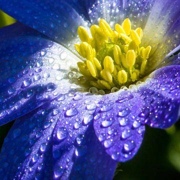 blauwe bloem met druppels von de buurtfotograaf Leontien