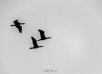Fliegende Freiheit von Nicole Harren