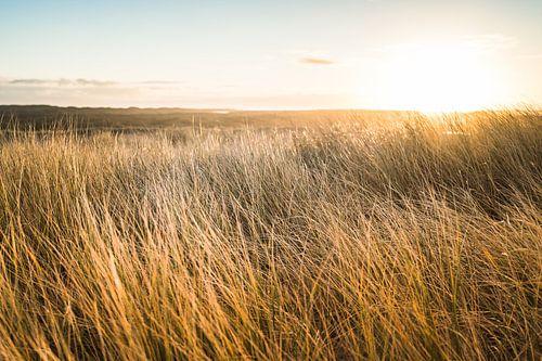 Zonsopkomst boven de Nederlandse duinen aan de Noordzee kust