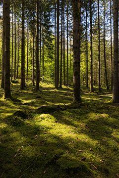 Licht und Schatten in den Wäldern der Wallonie von Kelly De Preter