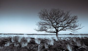 Groote Heide 8 van Desh amer