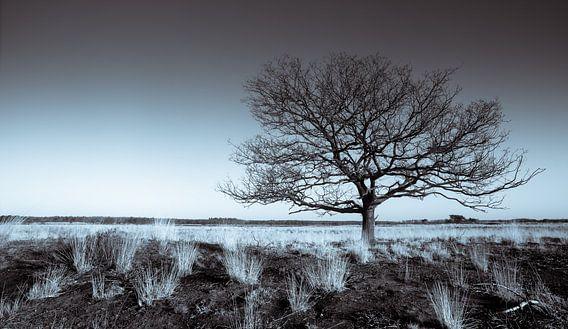 Groote Heide 8