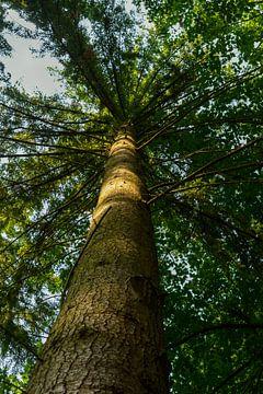 Hoge boom van Michelle Van Den Berg