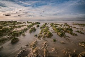 Zee Landschap van