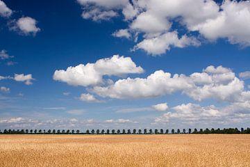 Zomers landschap von Bert Meijerink