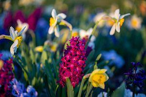 Blumen im Frühling von Dennis Eckert