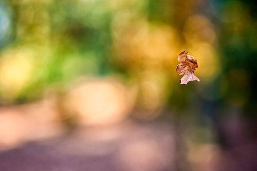 herfstblad aan rupsdraad van