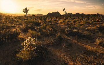 Der beleuchtete Cholla-Kaktus von Joris Pannemans - Loris Photography