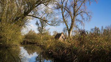 De Biesbosch van Esther van Nes