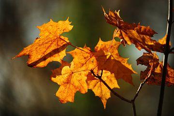 golden fall VII van Meleah Fotografie
