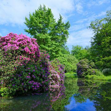 Parkidylle mit Rhododendron - quadratisch von Gisela Scheffbuch