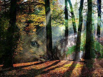 Wald Kalb von Ab Wisselink