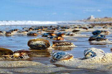 zeeleven van johnvanhfoto