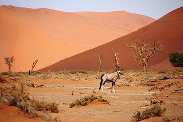 NAMIBIA ... Sossusvlei Oryx II van Meleah Fotografie