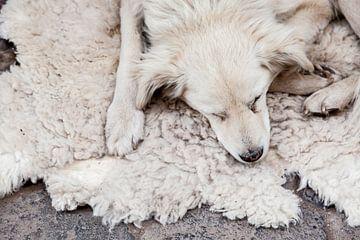 Hond in Peru van Bart van Eijden