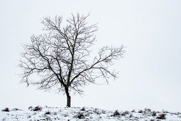 Einsam im Schnee von Manon Verijdt