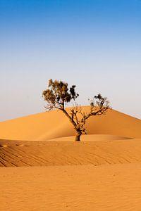 Colors of Marocco (15)